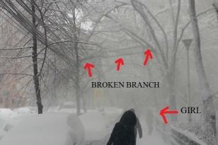 mopana-broken-branch-02