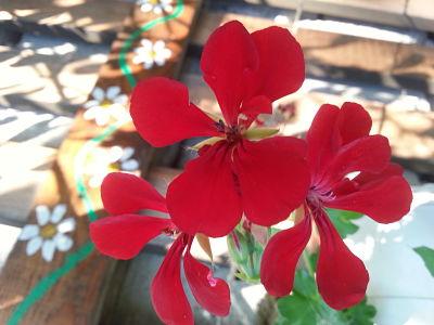 mopana-relaxation-among-flowers-06